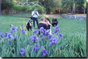couple in irises